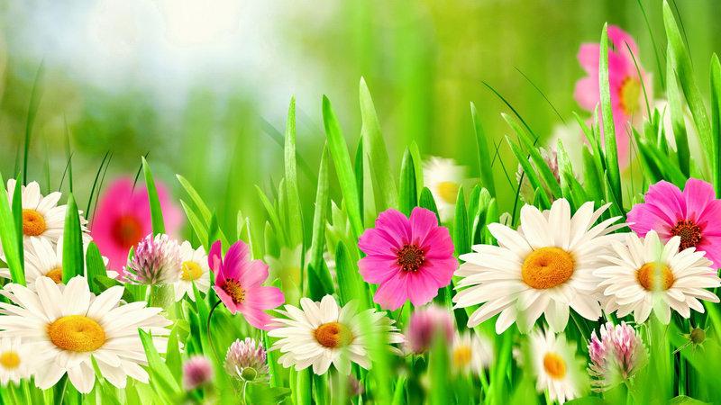 有没有漂亮一点的鲜花图片