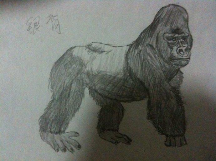 如何画大猩猩 大猩猩简笔画步骤图