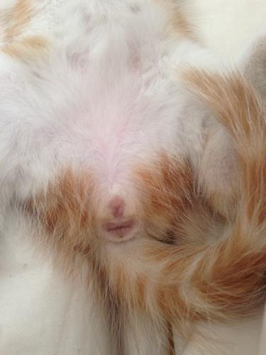 公猫内脏结构图