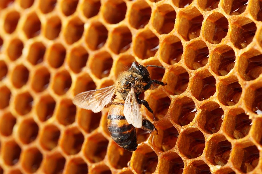 """4,鲸鱼是蜜蜂家园a鲸鱼的""""蜂巢""""和""""家具室"""".图片食品吃鱼图片"""