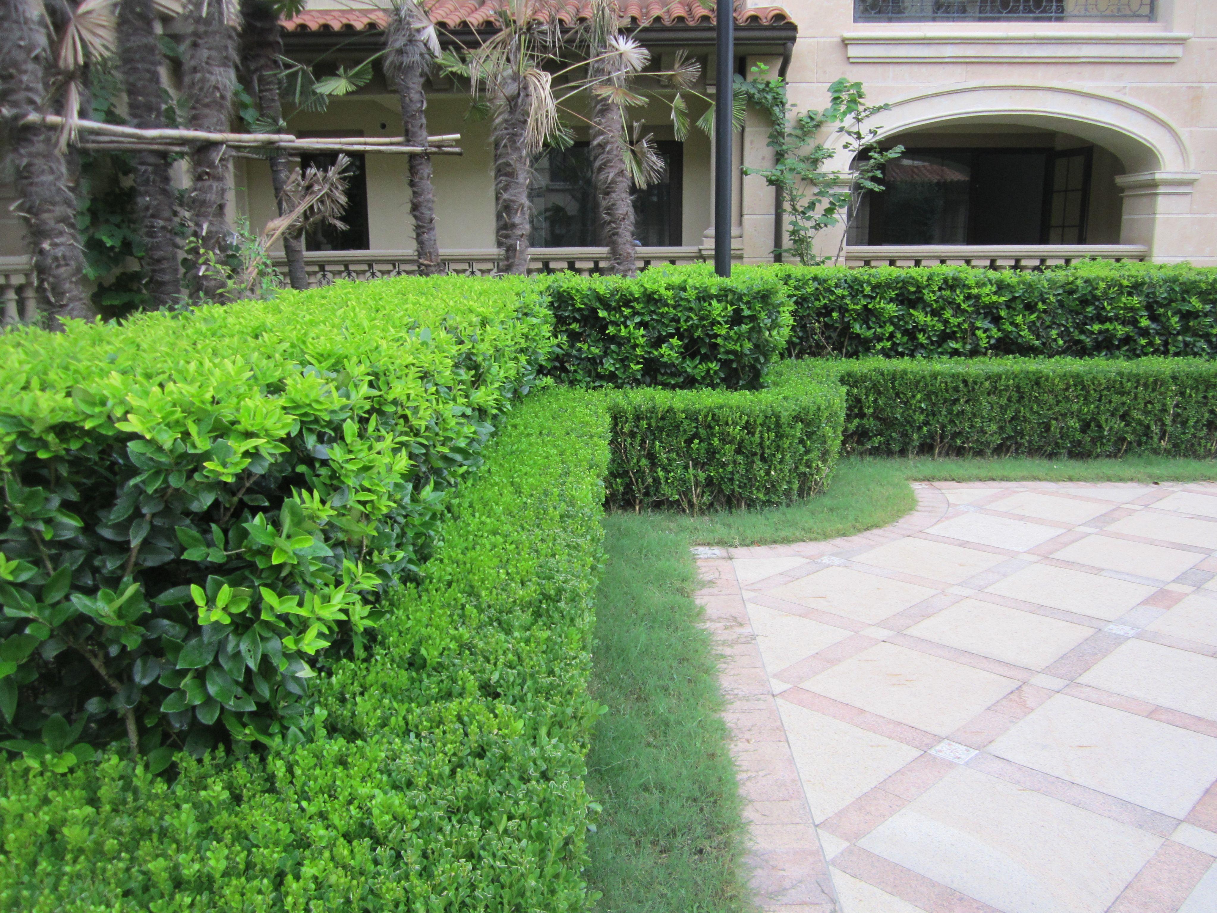 绿化魔纹设计图例