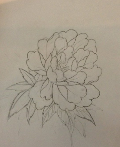 手绘牡丹图片黑白简单