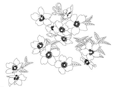 蔷薇花简笔画图片