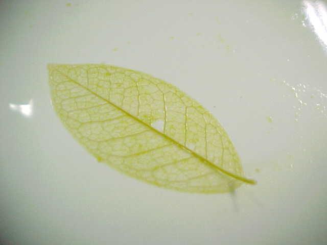 树叶的手工作品图片