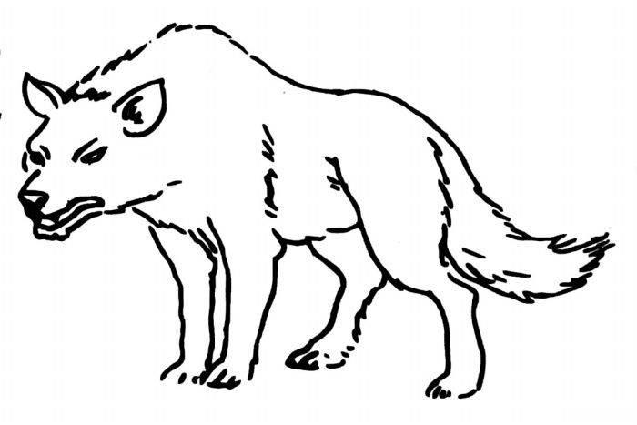 谁有狼的简笔画?
