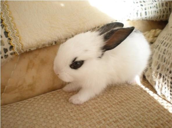 壁纸 动物 狗 狗狗 兔子 591_440