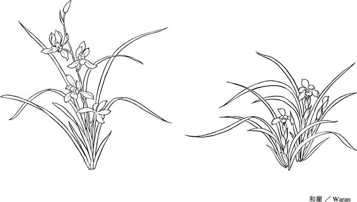 兰花素描图片越简单越好,要有花盆