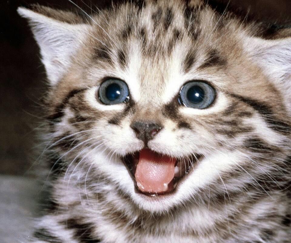 谁有特别可爱萌的小狗狗或者小兔子小猫咪的动态图片
