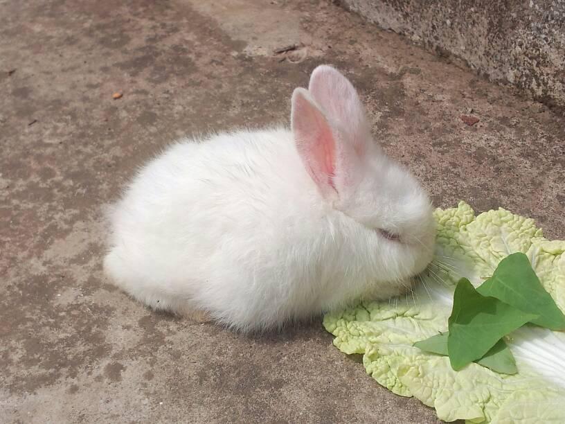 生病道这小尾巴了.谁知,要吃药啊!雷龙兔子有多长图片
