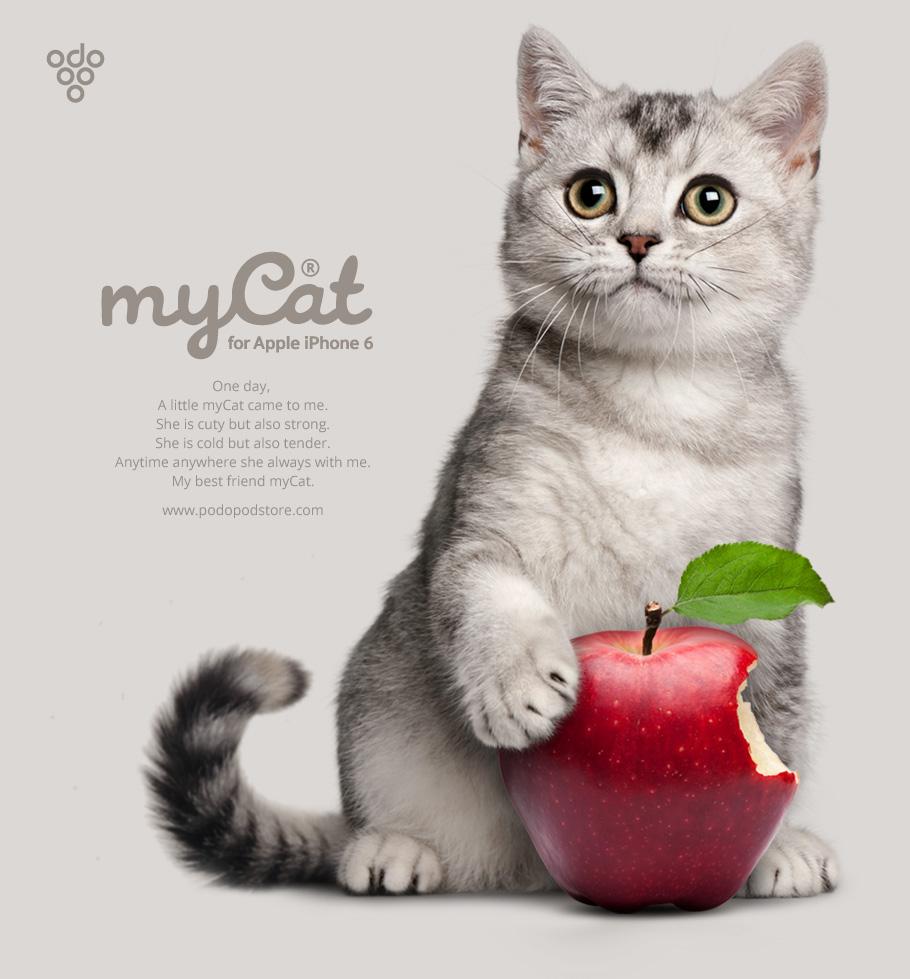 求这只猫的壁纸