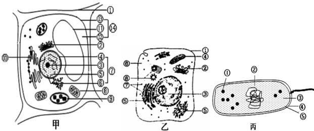 (2)甲图中具有双层膜结构的细胞器是______(填标号);乙图中能够产atp