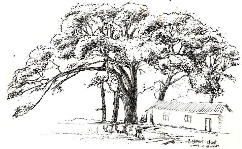 卡通樹圖片簡筆畫手繪