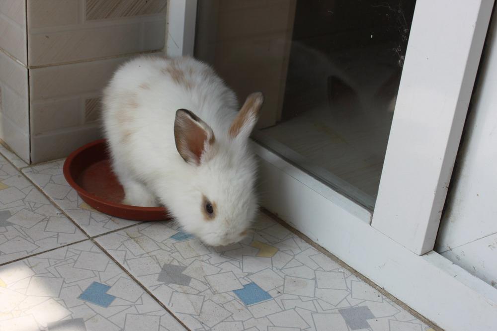 求家养兔子的图片,要真实的. 在这里发几张就行,不要链接和百度云.