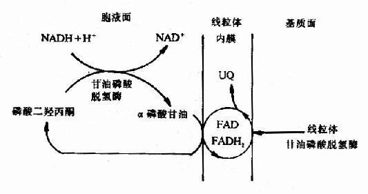 磷酸甘油酸激酶的检查过程