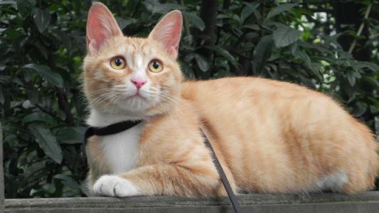 请问这首我是一只小猫,喵喵喵.我们一起唱歌喵