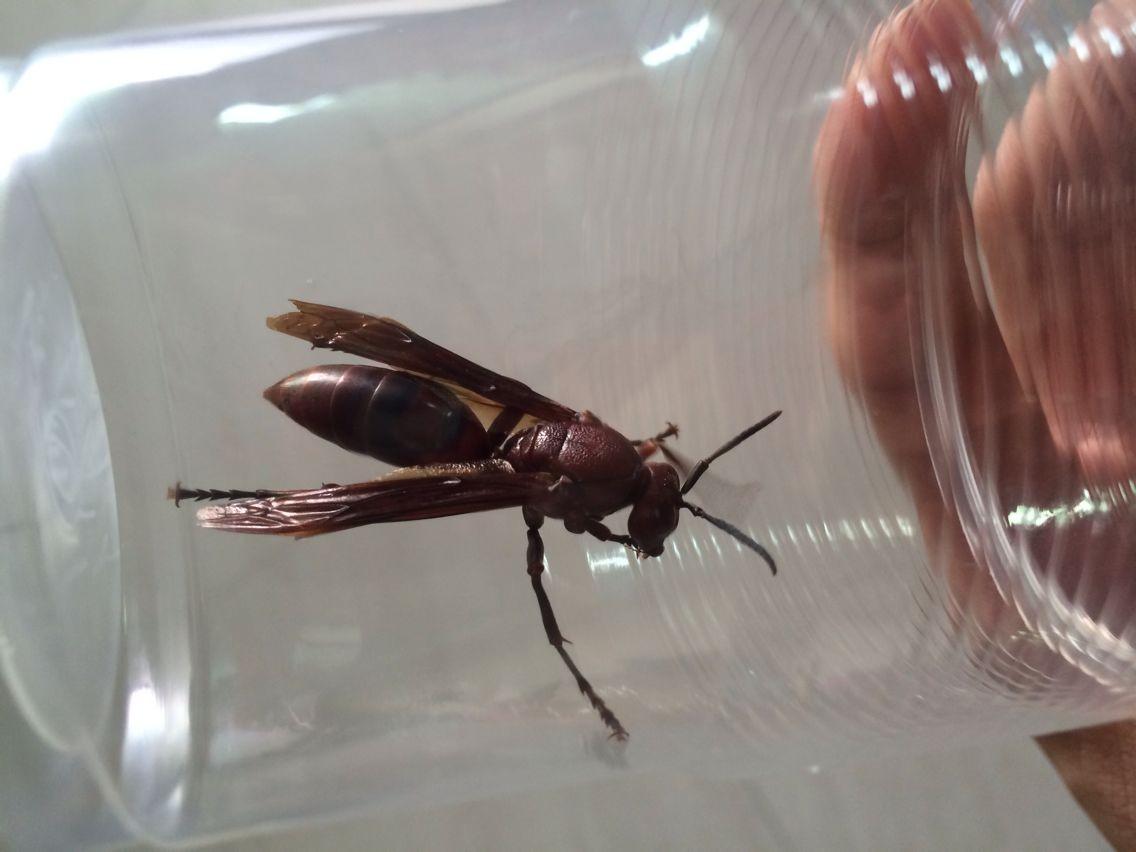 这种像动物又像蝙蝠的名字叫蜜蜂急知道它叫白玉蚂蚁是什么意思图片