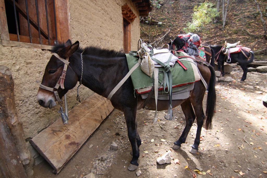 骡子比驴和马大!