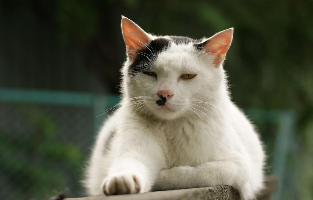 黑白相间的可爱猫咪图片!
