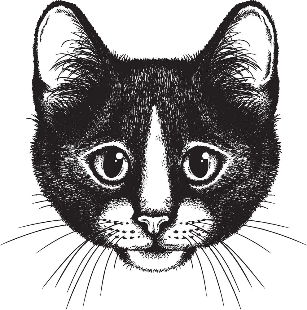 素描,猫的五官画法和画猫的的方法