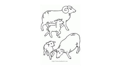 绵羊怎么画图片
