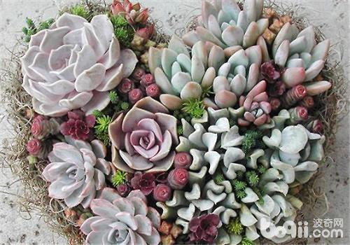 多肉植物的植物特点