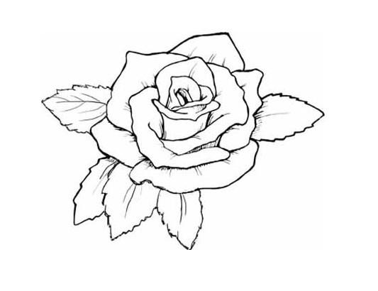 手绘花图片简约铅笔