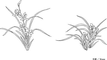 铅笔画兰花画法步骤