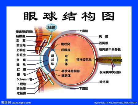 谁知道眼睛的构造?发个图呗!急!