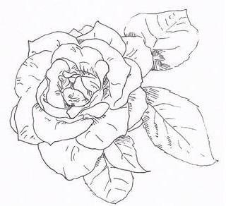 盛开的玫瑰素描怎么画