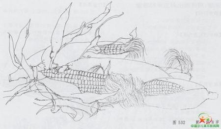 玉米怎么画