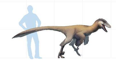 如果没有6500万年前的小行星撞击,恐龙会进化成什么样?的头图
