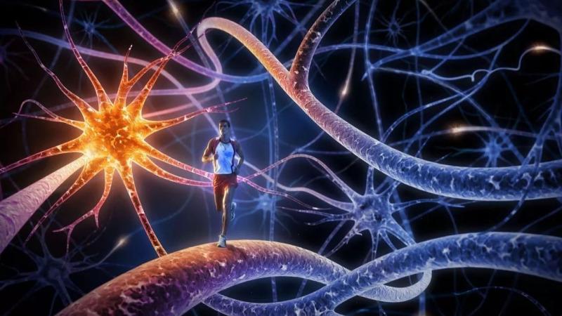 儿童的大脑能够被塑造,成年人也能够让大脑变聪明吗?的头图