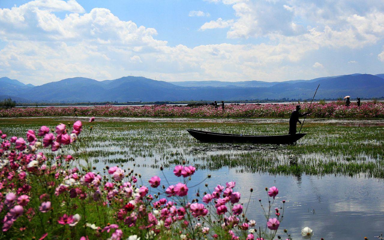 花海,湿地,小船,风景如画.图片