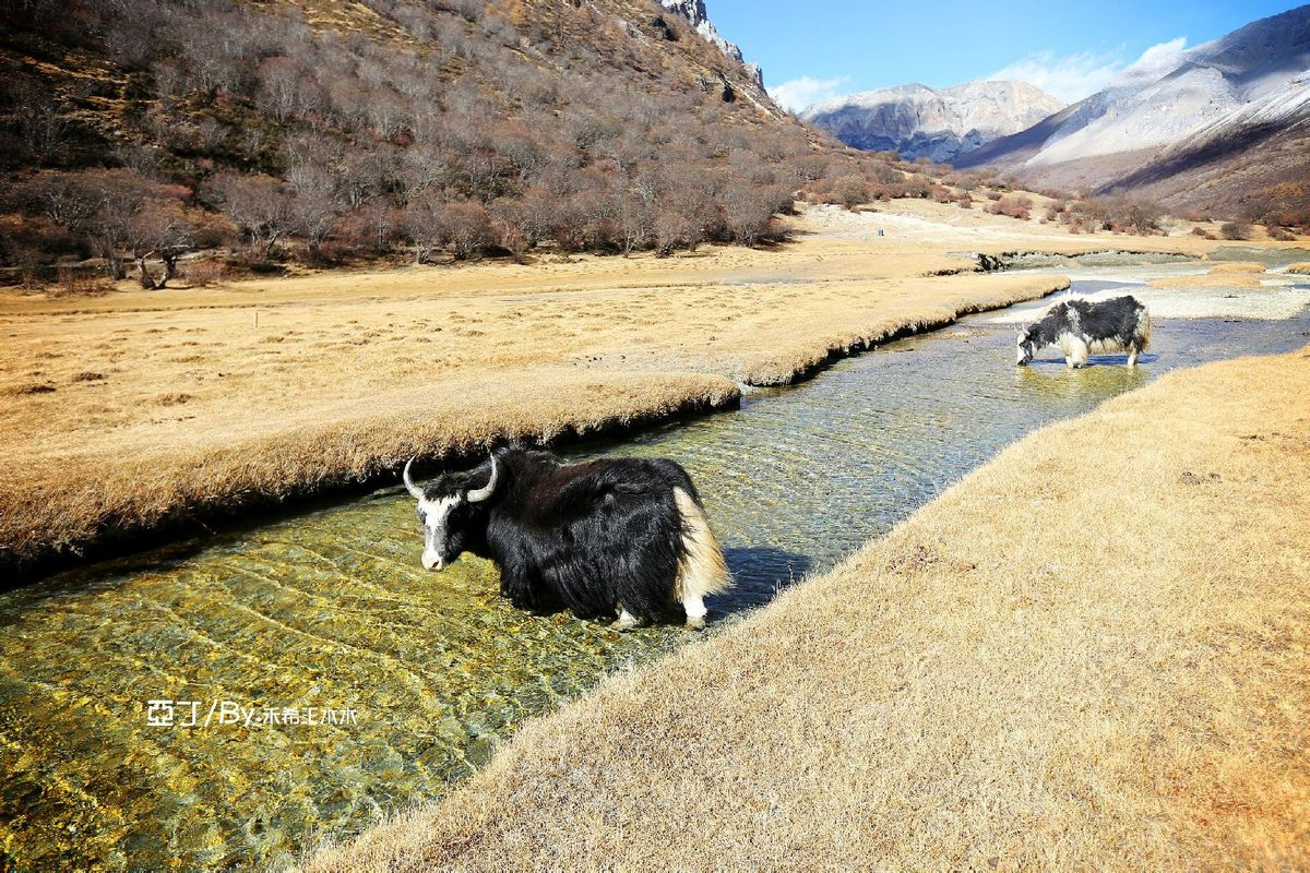 感觉在这里就是人与动物与大自然和谐相处的地方~图片