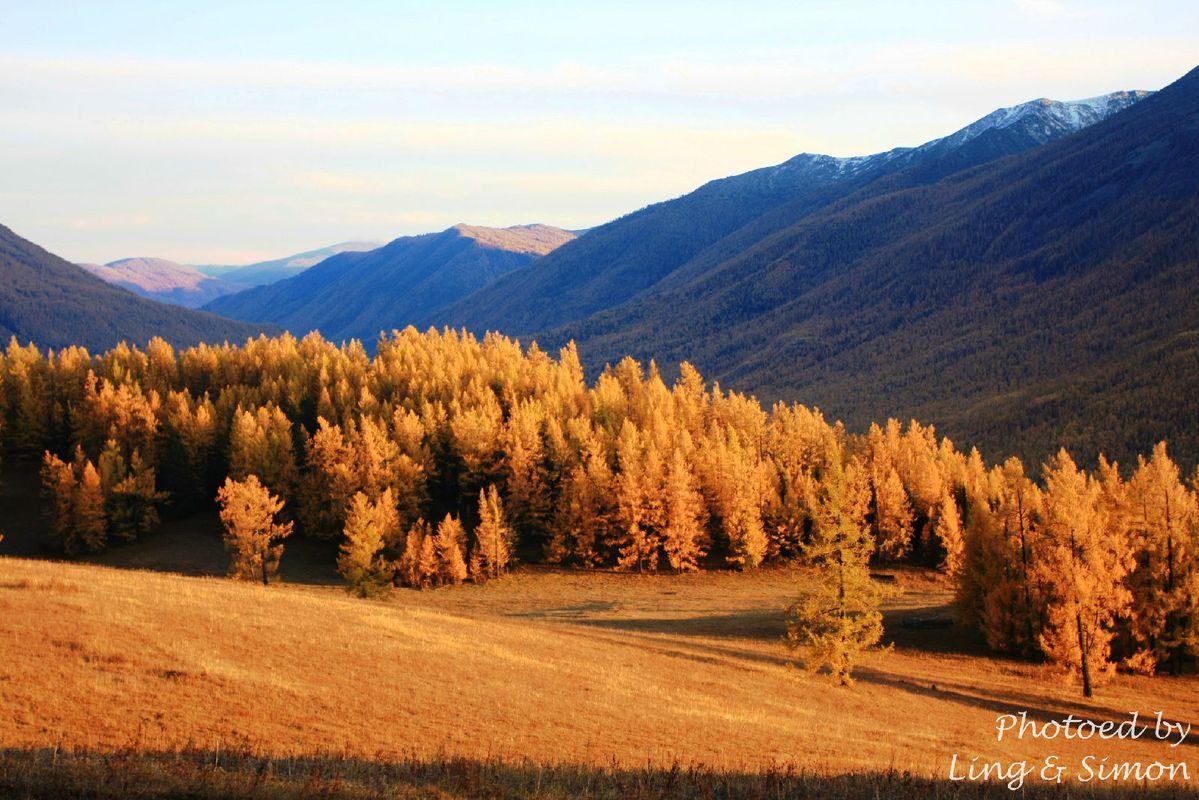 从观鱼亭下来的路上美景不断,阳光斜照在山坡上,黄叶泛起红光图片