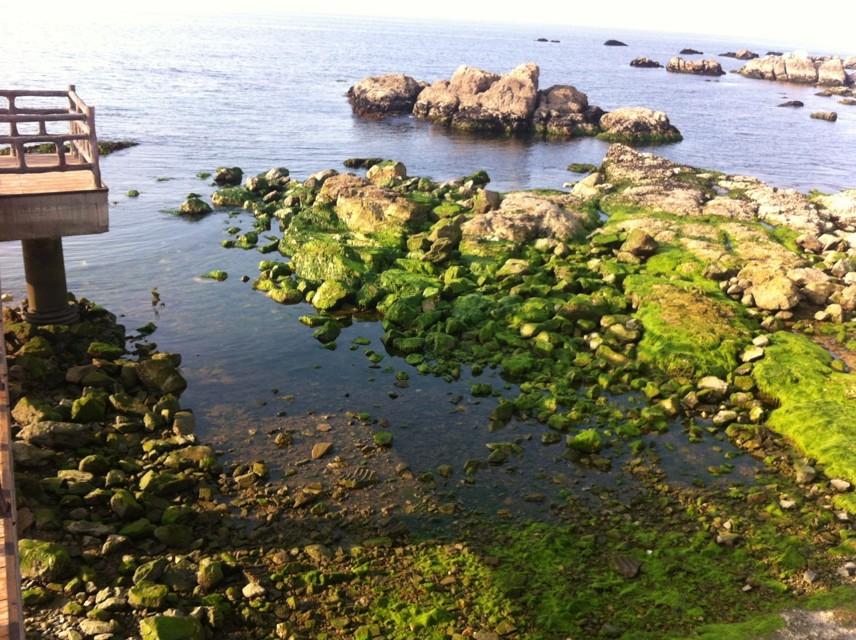 养马岛的海边图片