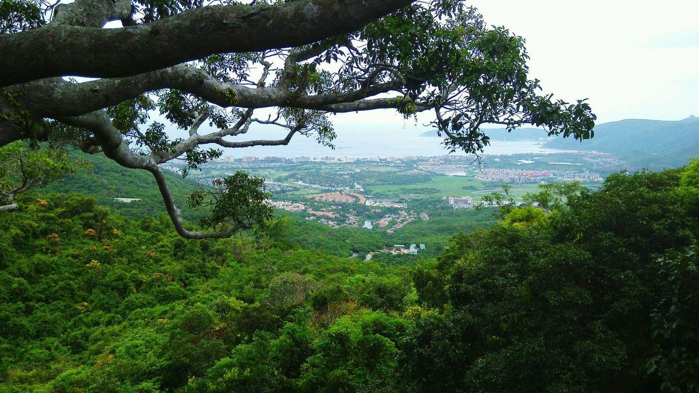 海南三亚亚龙湾森林公园图片