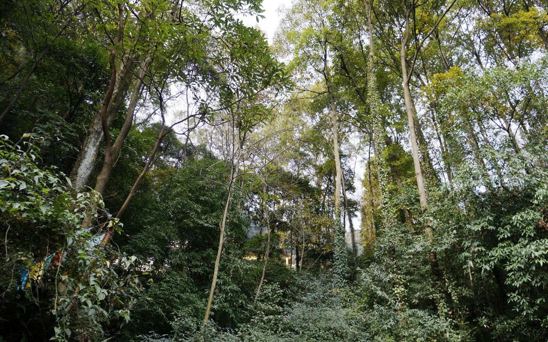 壁纸 风景 森林 桌面 800_500