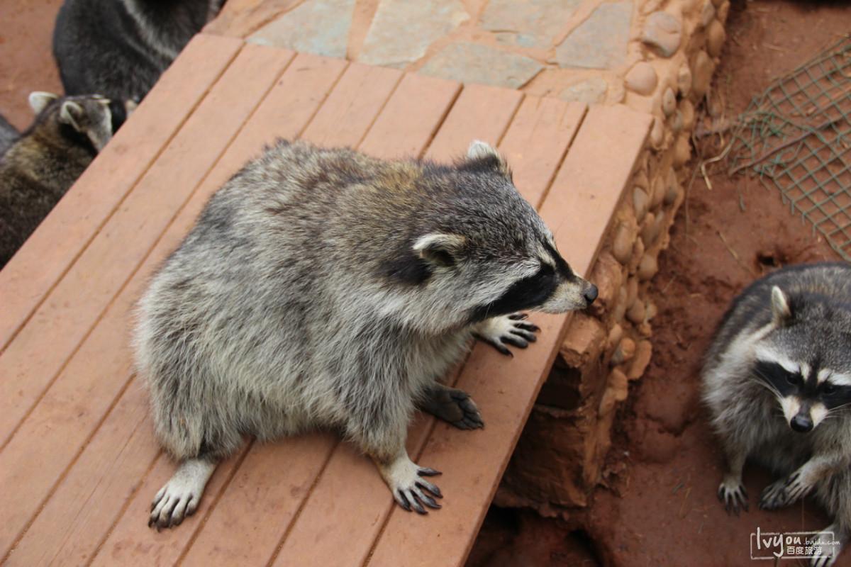 游记攻略  云南野生动物园游记  昆明野生动物园