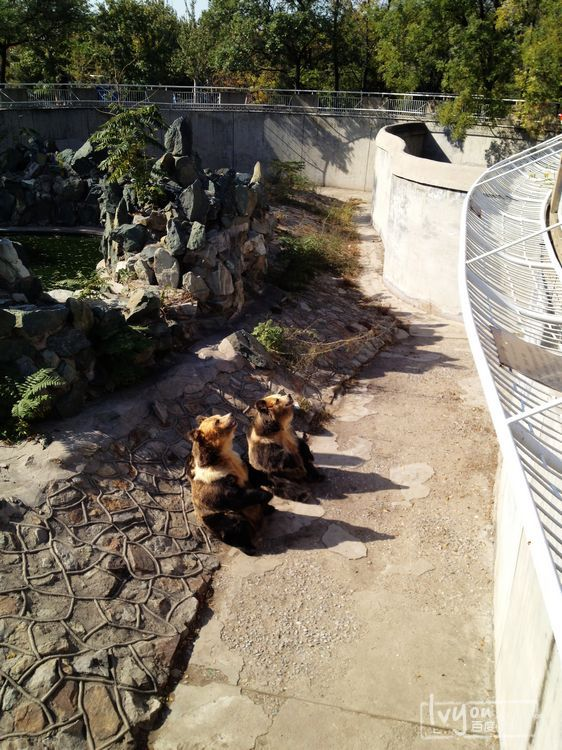 天津水上公园,动物园一日游