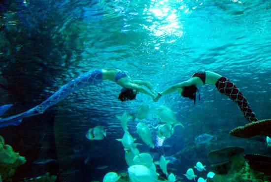 壁纸 海底 海底世界 海洋馆 水族馆 桌面 550_370
