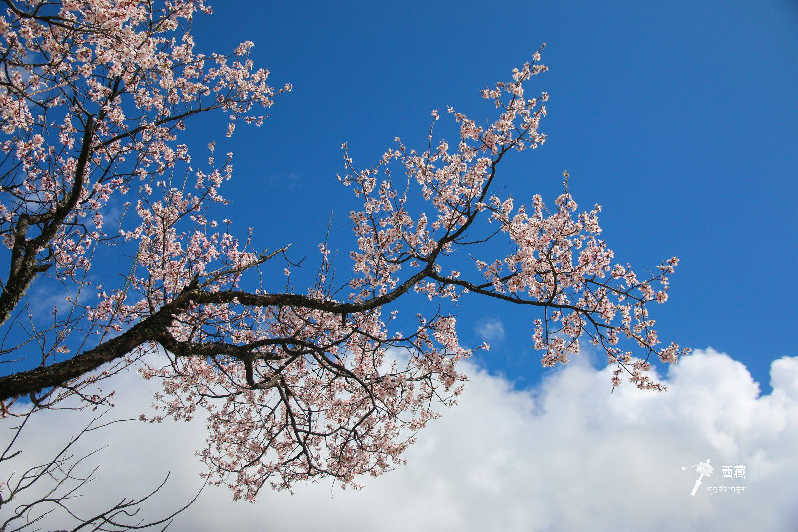 四月春天在林芝_拉萨旅游攻略_百度旅游