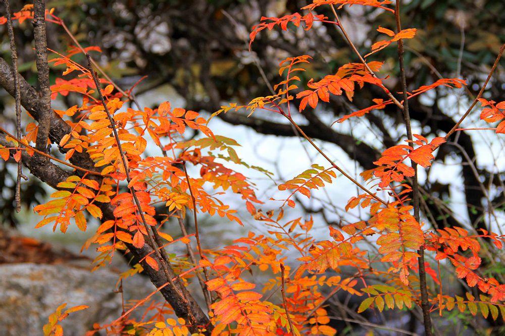 木格措一年四季皆美景,吾却独爱秋.图片