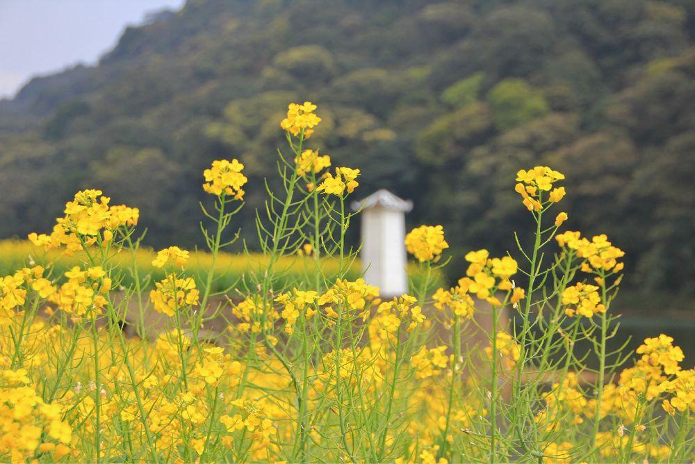 羊城广州——从化石门赏花踏春