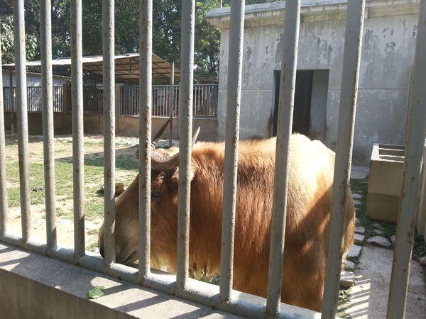 《北京动物园》