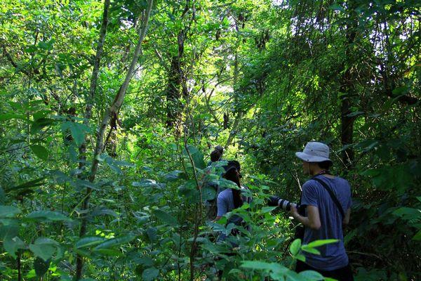 穿越丛林图片图片