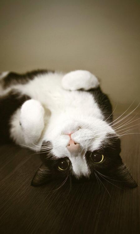 求可爱小动物图片!