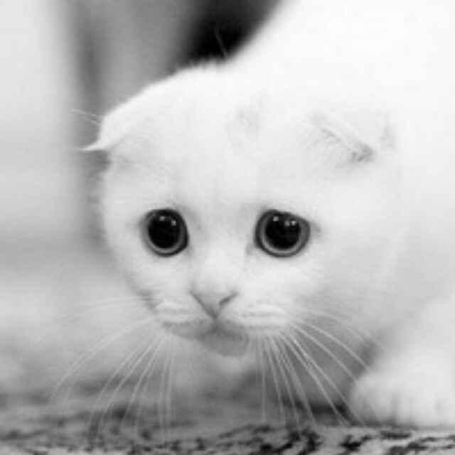 求跟这个差不多可爱的猫咪头像,白色的