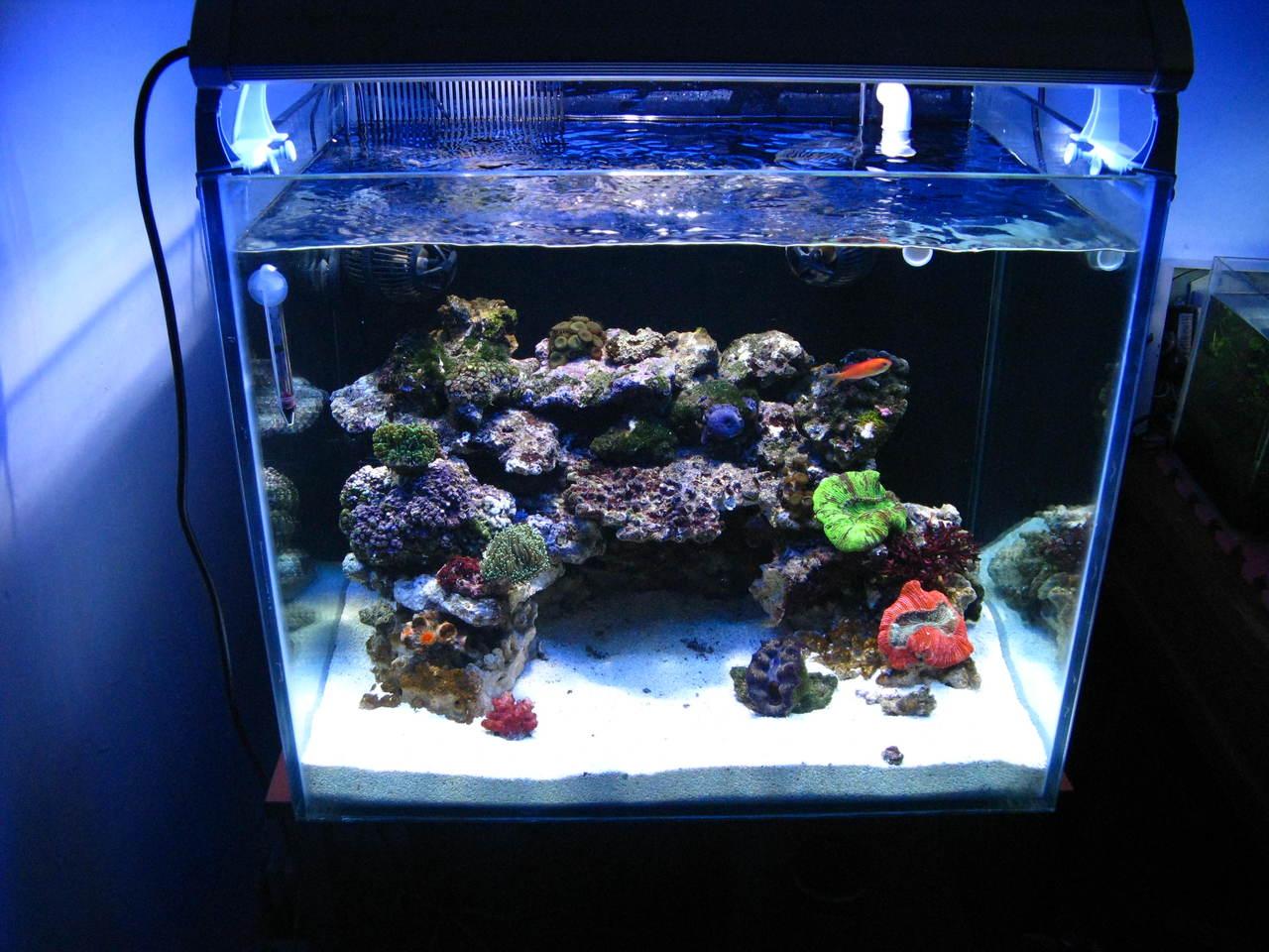 关于海水缸,超白缸,珊瑚缸,水草缸图片