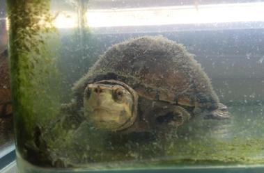 经典龟长台词v经典啊真菌帮中麝香鲨鱼图片